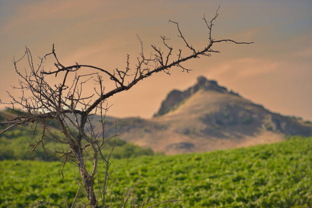 Cтоковое фото Mountain range and dead tree.