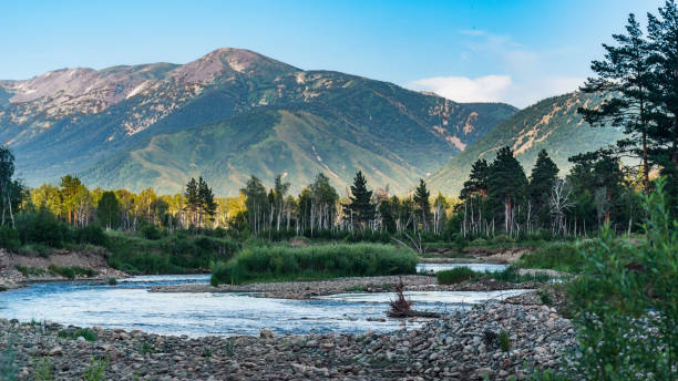 mountain river and forest trees on the sunset, altai mountains, kazakhstan - altai nature reserve стоковые фото и изображения
