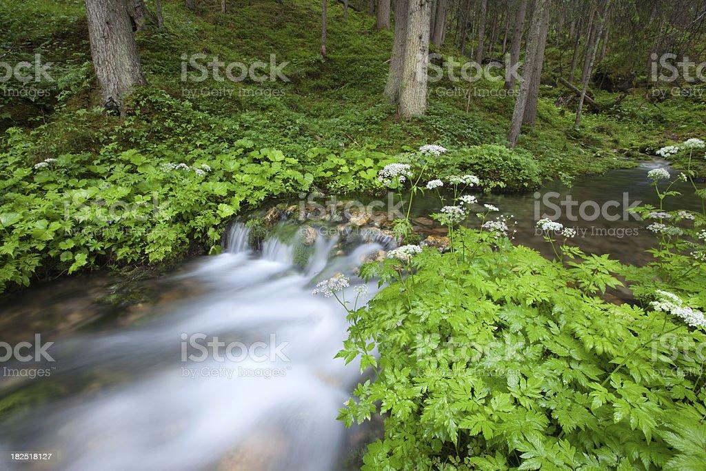 mountain river - austria, tirol royalty-free stock photo