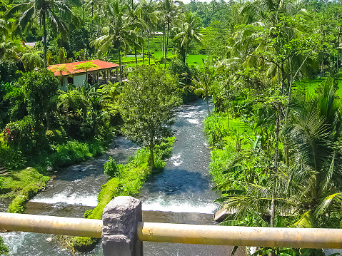 Mountain river Ayung among the jungle and bamboo thickets in Ubud, Bali