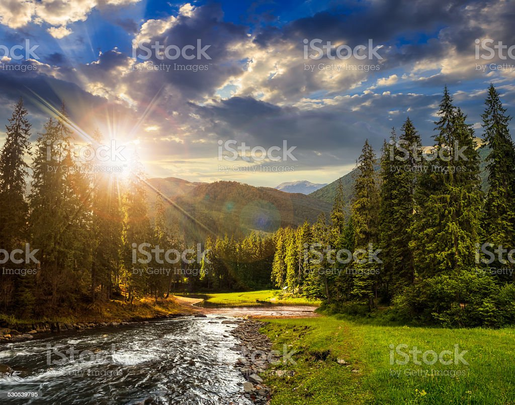 Mountain river in pine forest at sunset stock photo