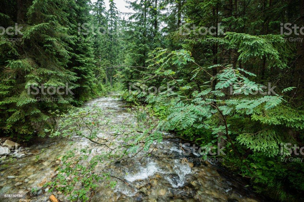 mountain river in summer photo libre de droits