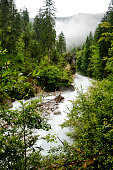 Fast water stream in mountain river in the forest. Large and small stones along the banks. Thick forest, fog, mountains in the background. Summer day.