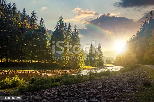 mountain river winding through forest at sunset in evenig. beautiful nature scenery in autumn. spruce trees by the shore. wonderful piece of synevyr national park landscape in good weather with clouds
