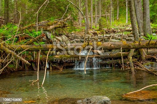 Fallen fir trees over mountain river with wet, slippery rocks overgrown with moss.