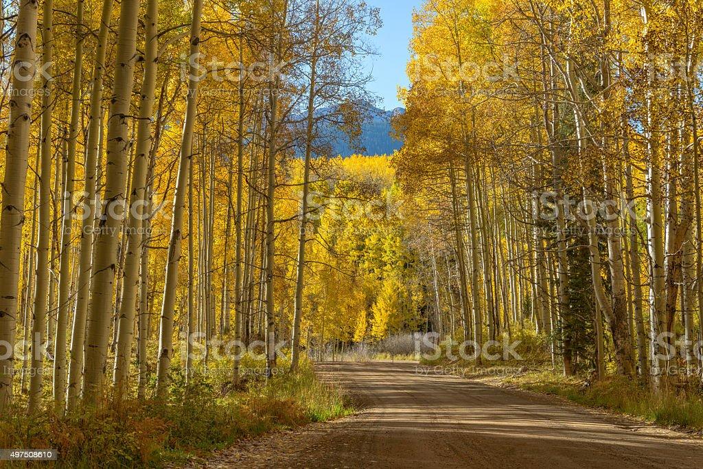 Mountain Road in Golden Aspen Grove stock photo