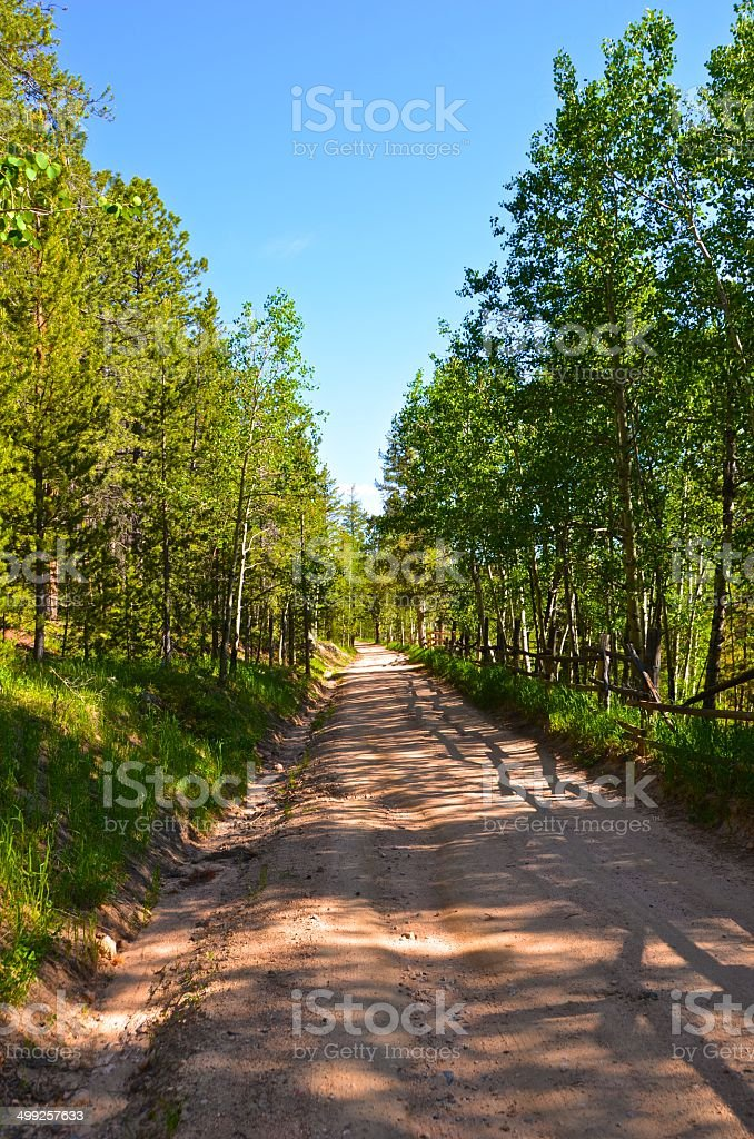 Mountain Road lined with Pines & Aspen stock photo