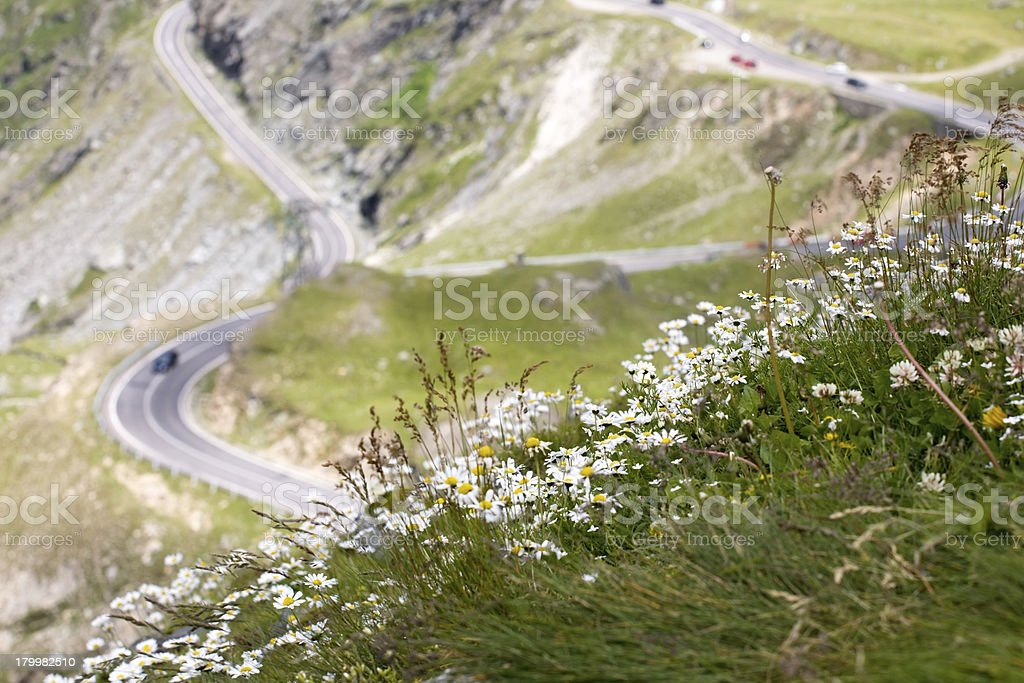 mountain road with camomiles foreground royalty-free stock photo