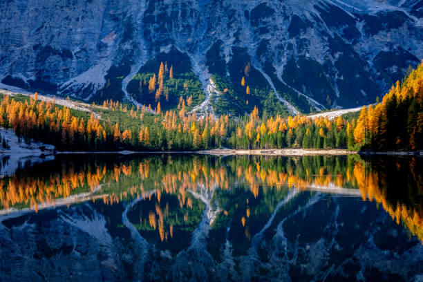 mountain rocks and autumn forest reflected in water of braies lake, dolomite alps, italy - dolomiti foto e immagini stock