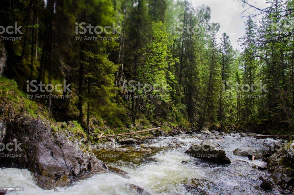 Mountain rocky creek through the green forest photo libre de droits