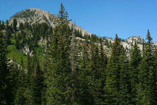 mountain scene with pines stock photo