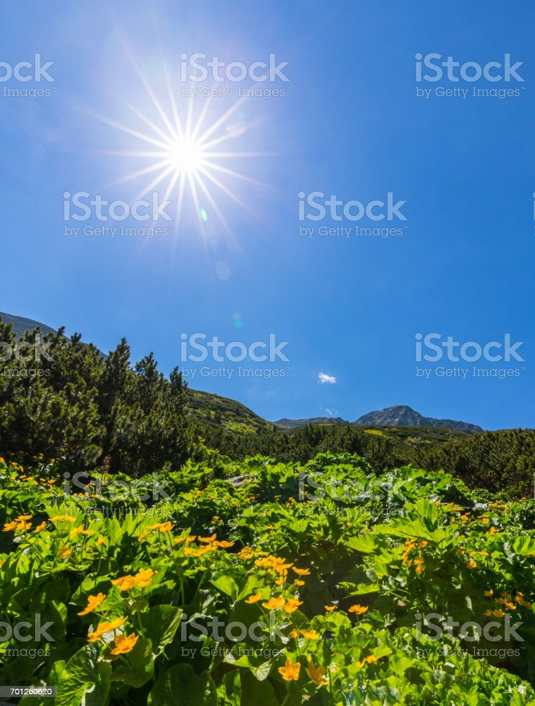 Mountain Scenery In The Transylvanian Alps In Spring With Beautiful