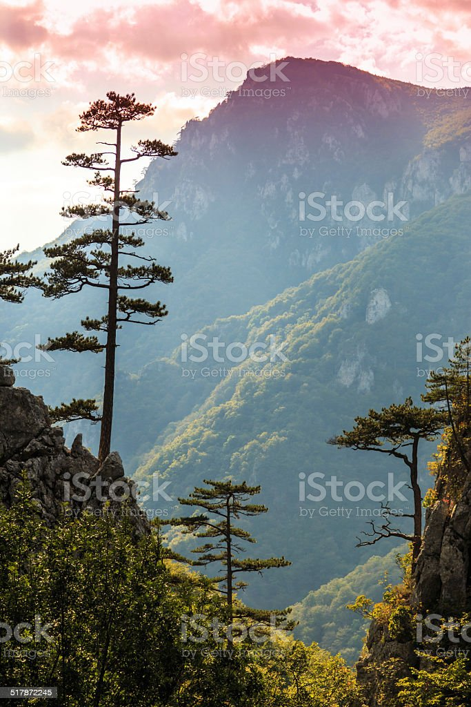 Mountain scenery with black pine tree silhouettes and stormy sky stock photo