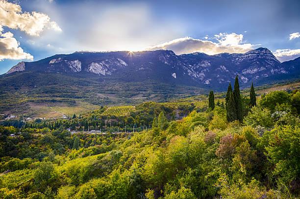 Mountain slopes and grape in Crimea stock photo