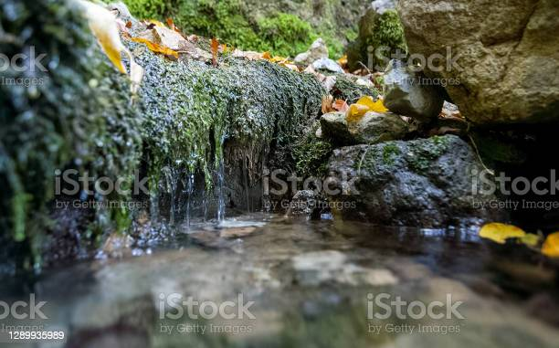 Photo of Mountain small river in forest with rapids and waterfalls. A forest creek.
