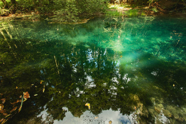 Mountain spring, forest reflection in water surface, Romania stock photo