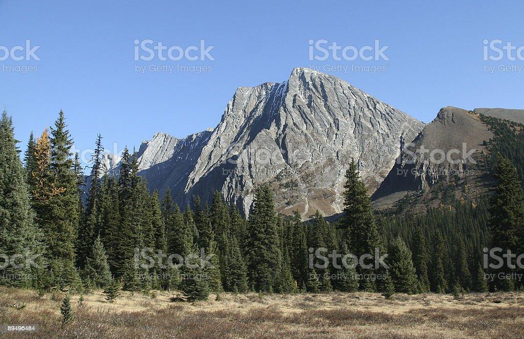 & montagna Foresta di Abete foto stock royalty-free