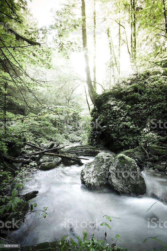Mountain Stream against Sun Light royalty-free stock photo
