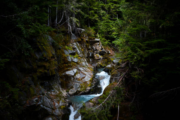 Mountain Stream Cutting Through Rock in Forest stock photo