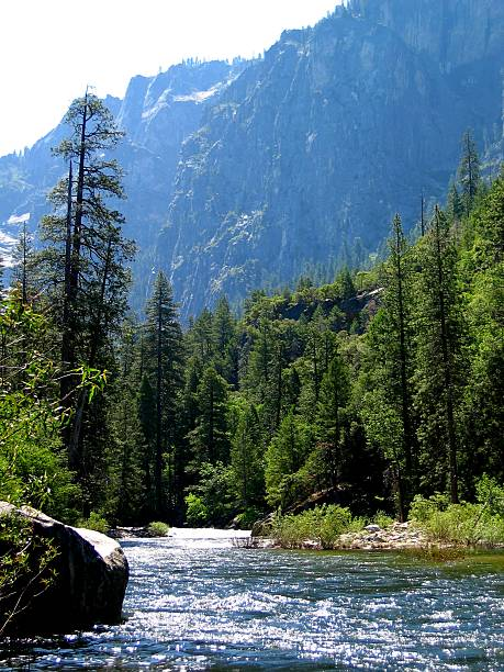 Mountain stream flowing through a forest of green trees stock photo