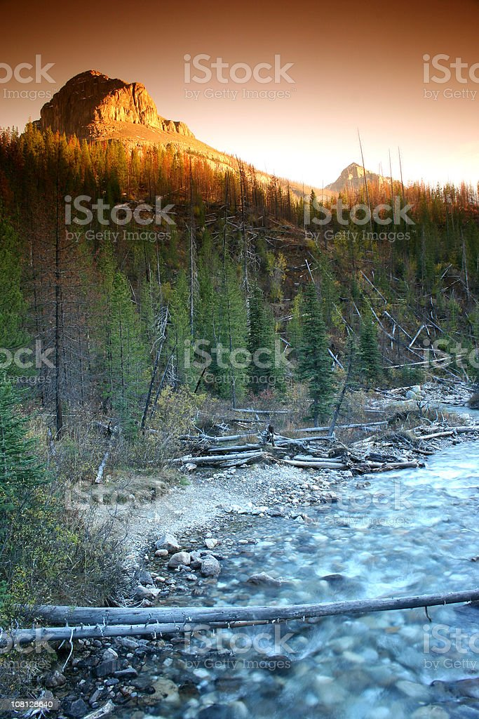 Mountain Stream in Forest royalty-free stock photo
