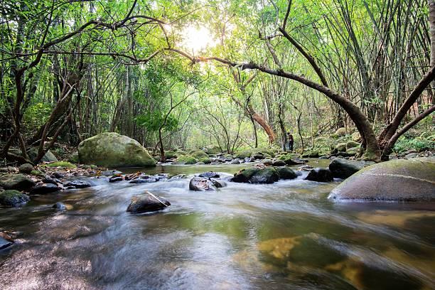 Mountain stream im grünen Wald in den Frühling – Foto