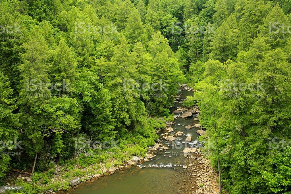 mountain stream in summer stock photo