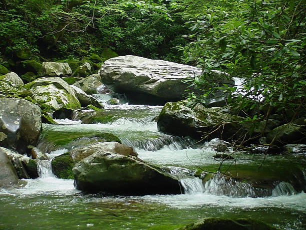 Mountain Stream in Tennessee stock photo