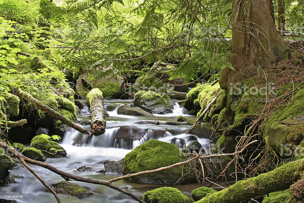 Mountain Stream in the Pacific Northwest royalty-free stock photo