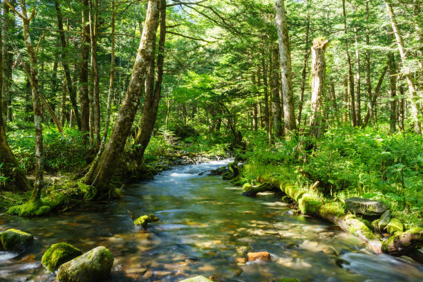 mountain stream, kamikochi - forest bathing foto e immagini stock
