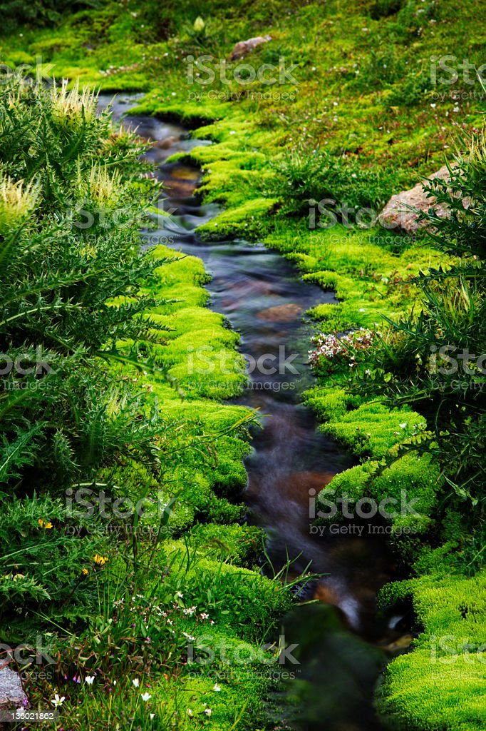 Mountain Stream (XXXL) royalty-free stock photo