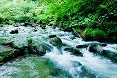 peaceful mountain stream flows through lush forest plants