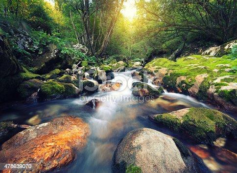 Water stream in an idylic forest (Šunikov vodni gaj, Slovenia).