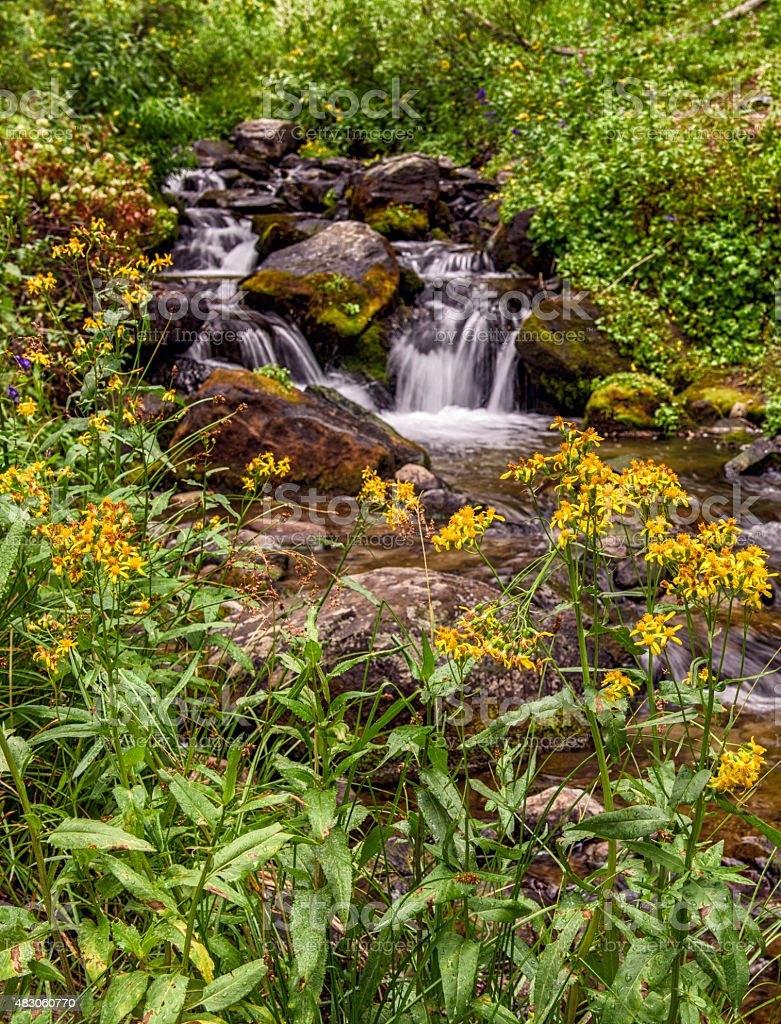 Mountain Stream Surrounded by Yellow Wildflowers stock photo