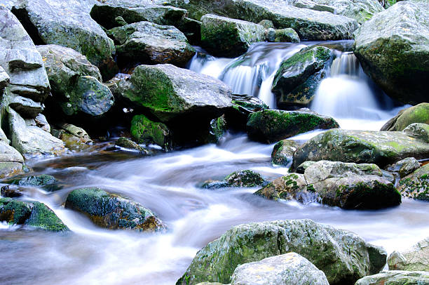 Mountain stream with indigenous forests, South Africa stock photo