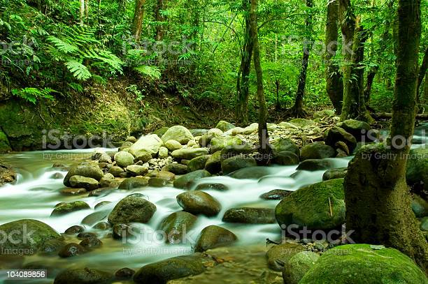 Photo of Mountain stream with lush green trees on either side
