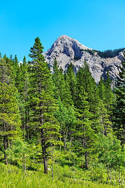 Mountain summer stock photo