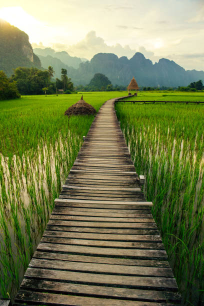 berg sonnenuntergang und grüne reisfelder in vang vieng, laos - laos stock-fotos und bilder