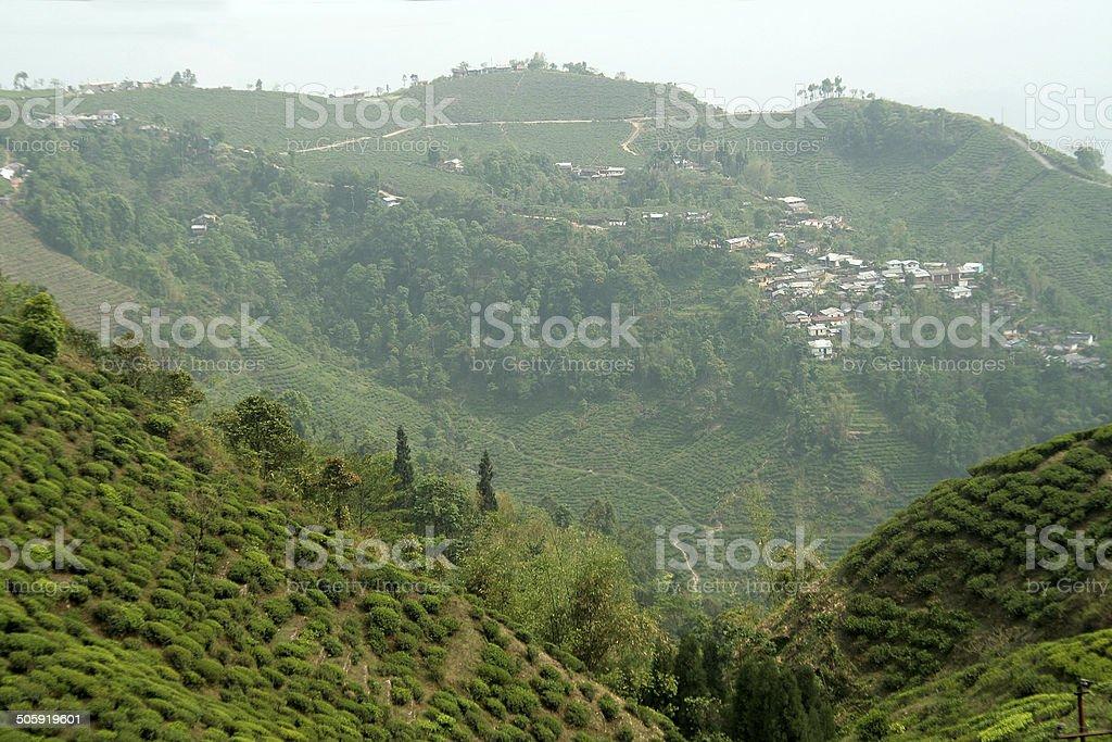 Mountain Town and Tea Garden stock photo
