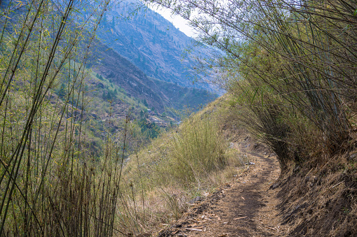 Mountain trail in the bamboo thickets.