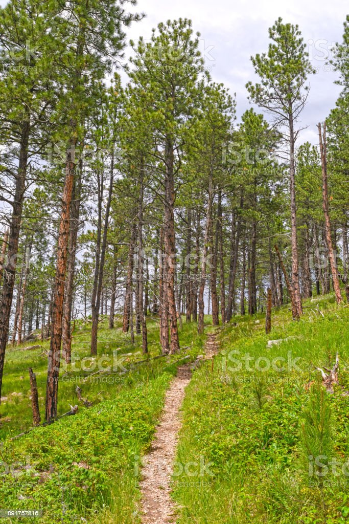 Mountain Trail in the Pines stock photo