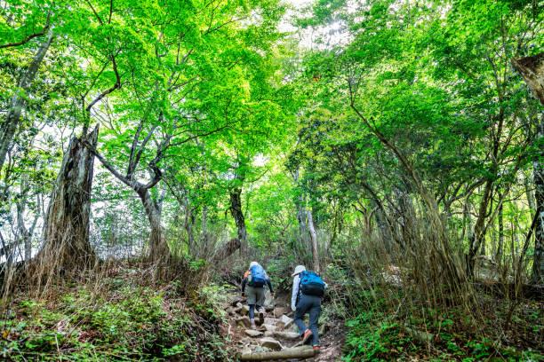 山のハイキングコース - 登山 ストックフォトと画像
