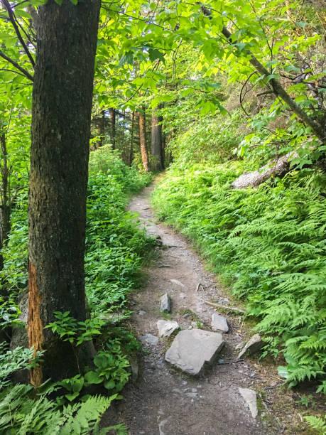 mountain trail tennessee - pacific crest trail stock-fotos und bilder