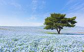 山や木々と Nemophila 日本で
