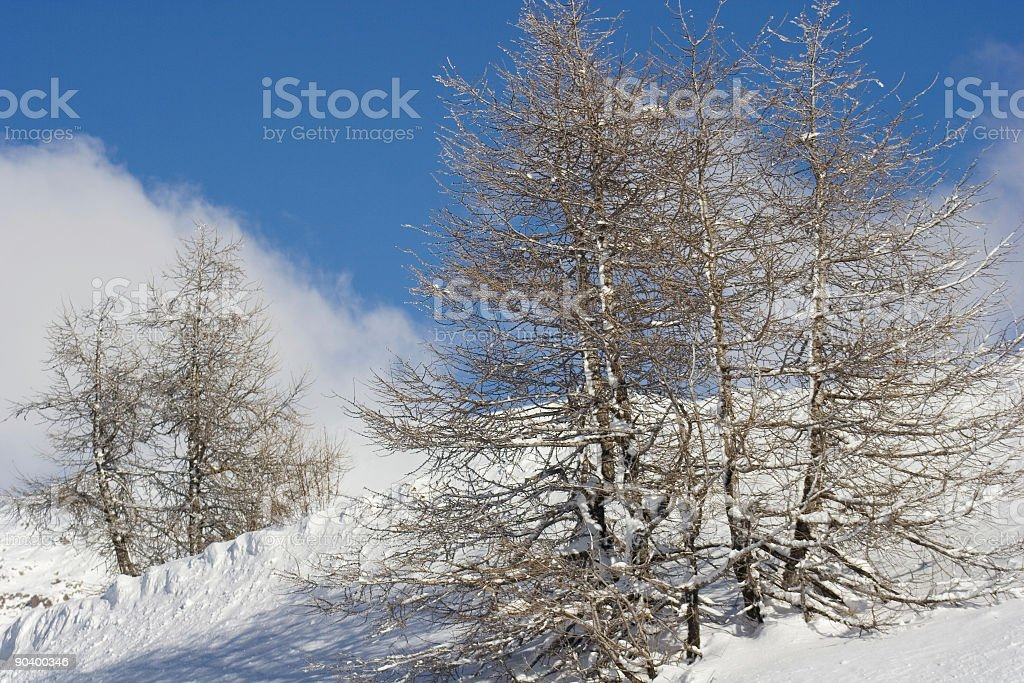 Mountain Trees in the Snow Against a Blue Sky royalty-free stock photo