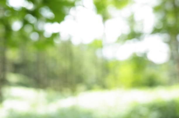 Mountain trees, Natural defocus (blur) background stock photo