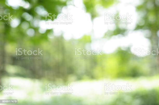 Photo of Mountain trees, Natural defocus (blur) background