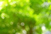 Formal Garden, Springtime, Summer, Agricultural Field, Glitter