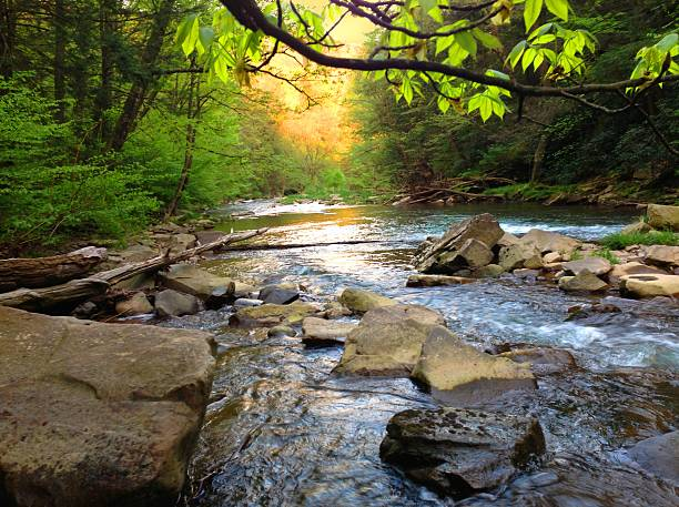 Mountain Trout Stream in Pennsylvania Brush Creek stream in Somerset County Pennsylvania. pennsylvania stock pictures, royalty-free photos & images