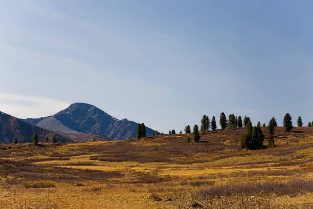 山ツンドラ - ツンドラ ストックフォトと画像
